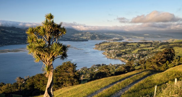 View of the bay of Dunedin, South Island, New Zealand. Image: Getty
