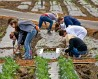 Charitable volunteers plant spinach in Irvine, CA. Image: Alamy