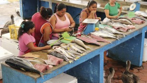 Women working on a fish stall in the Galapagos. Image: Gavin Haines