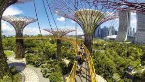 Skywalking at Gardens by the Bay, Singapore. Image: Getty