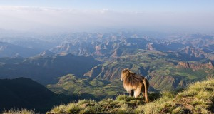Ethiopia: Trekking the Simien Mountains