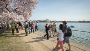 Cherry blossom at Tidal Basin, Washington DC. Image: Jeff Mauritzen