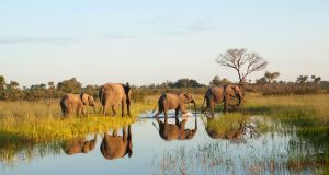 Botswana: On safari in the Chobe National Park