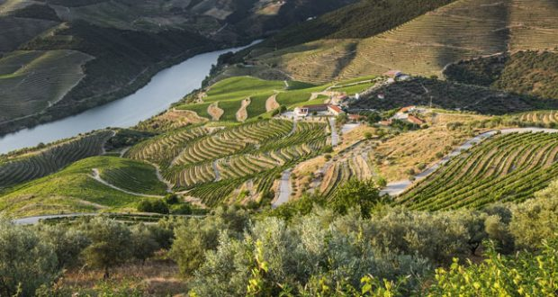 Terraced vineyards of the Douro Valley. Image: Getty