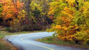 Winding road through the Ontario forest. Image: Getty