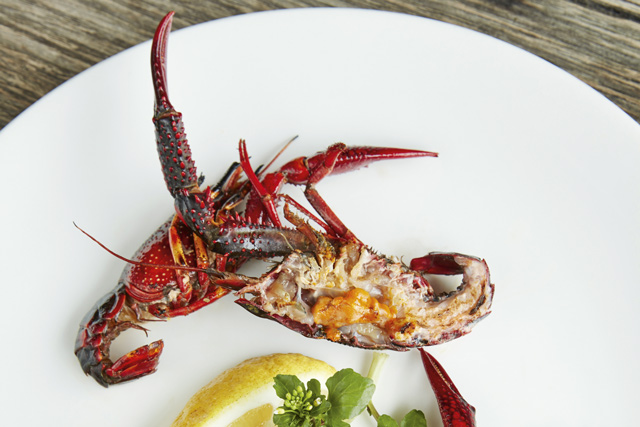 Freshly cooked canal lobster (red swamp crayfish), Restaurant AS. Image: Richard James Taylor