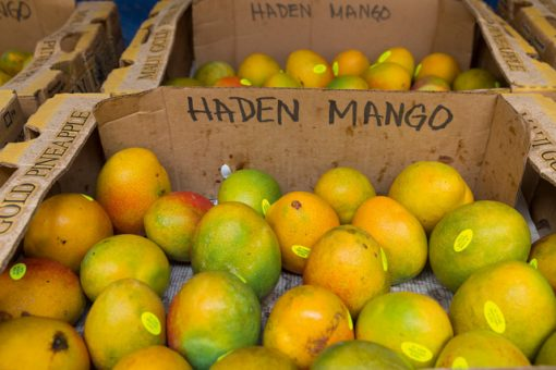 Mangos for sale at Yee's stand. Image: Susan Seubert