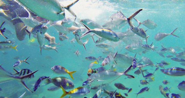 Tioman Island: colourful fish