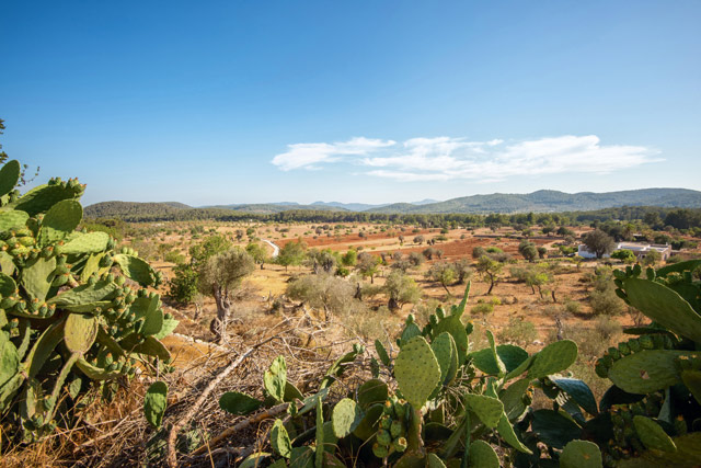 Cacti in the rugged Ibiza landscape. Image: Alamy