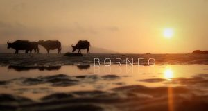 Travel video of the week: Borneo