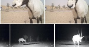 Dubai: return to the wild