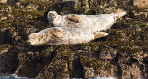 Farne Island: Seal of approval