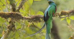 The quetzal quest
